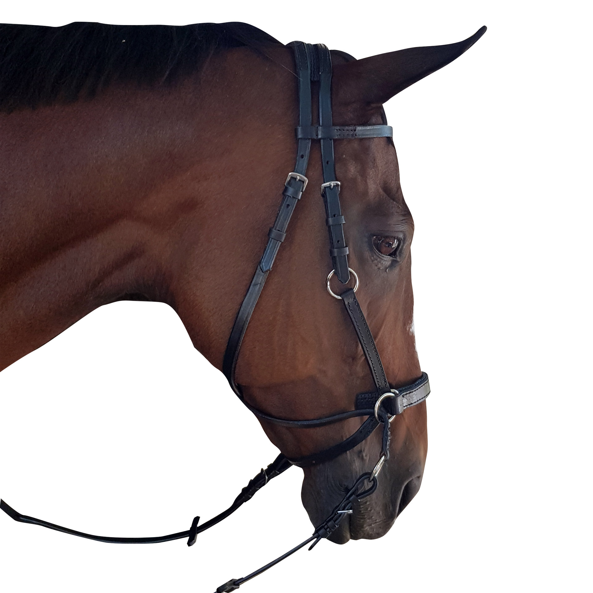 Bridle Bitless Crossover Solo