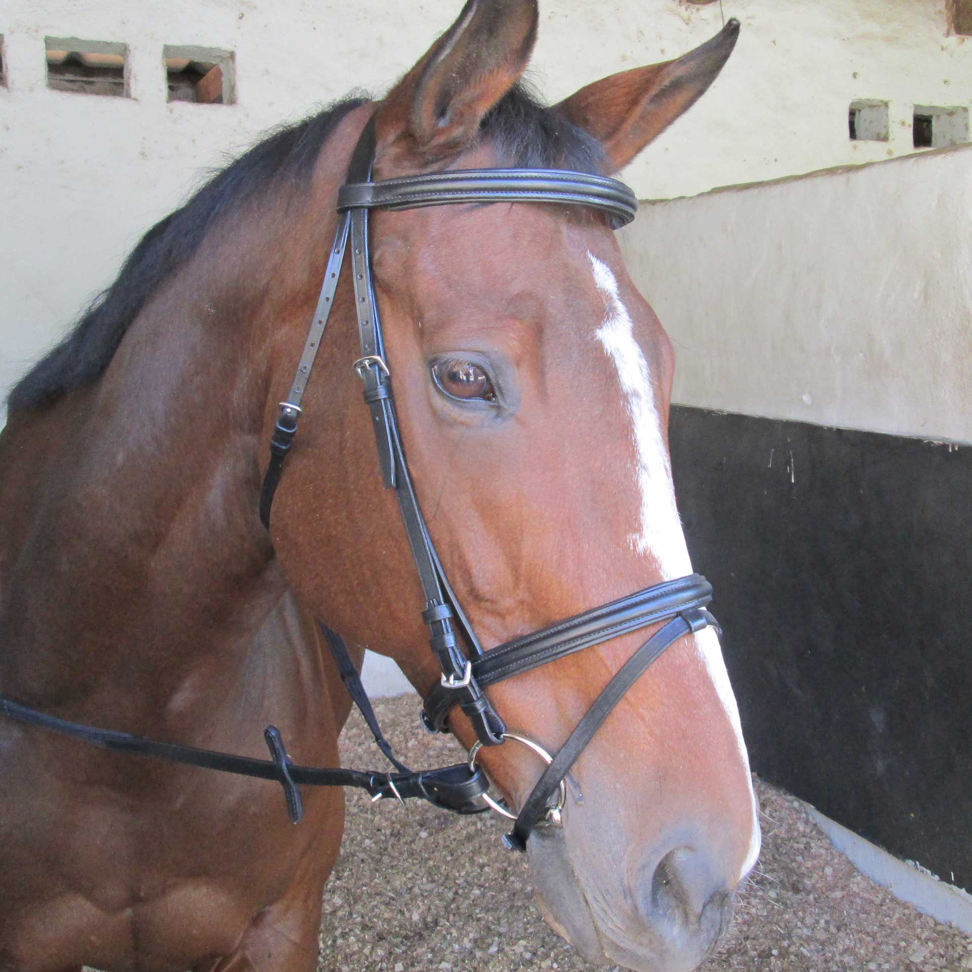 Bridle Raised & Padded Solo
