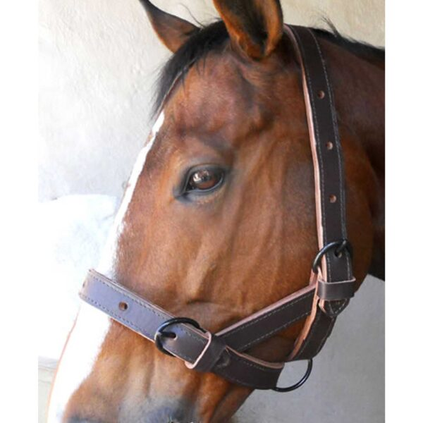 Halter Cattle Double Leather Solo