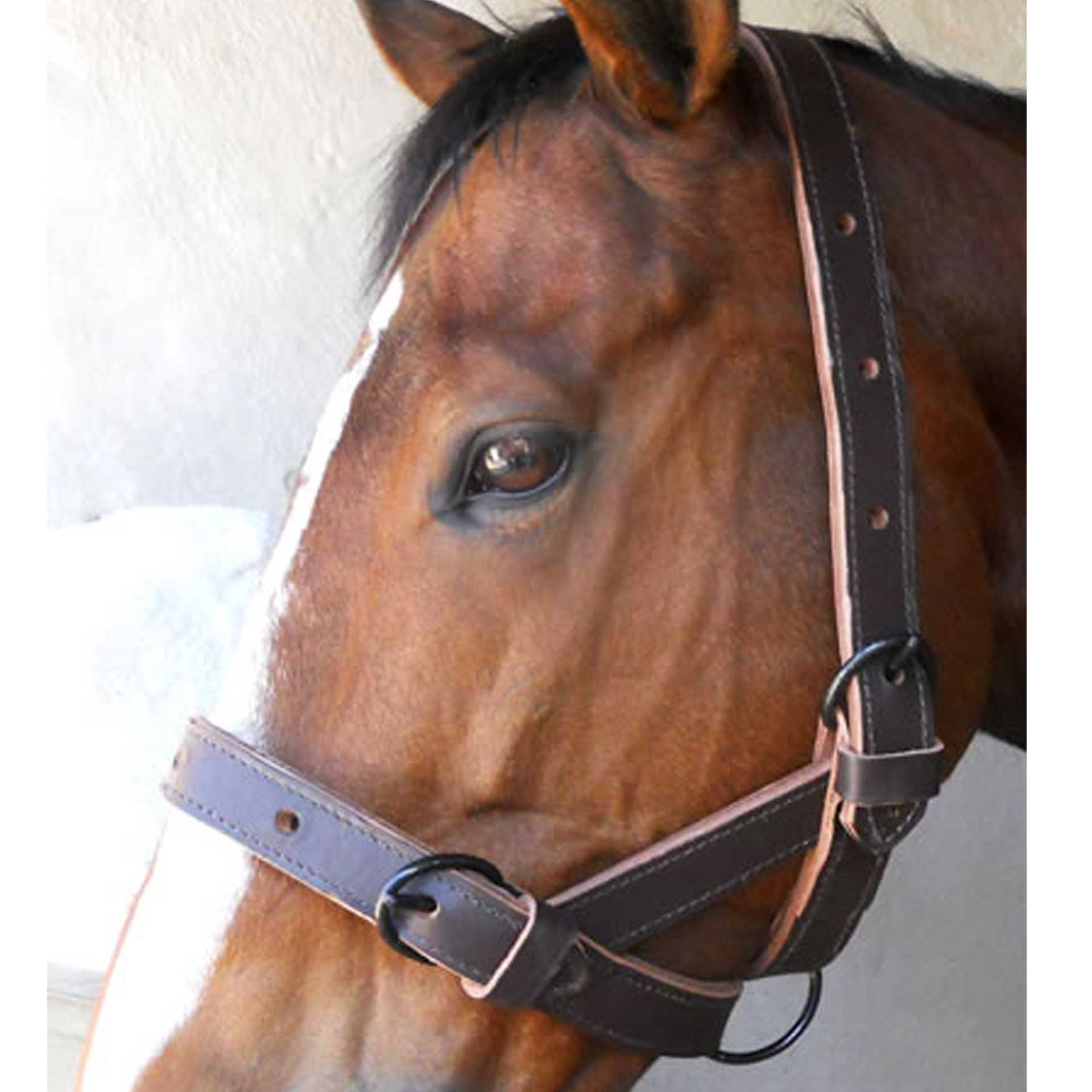 Halter Cattle Single Leather Solo