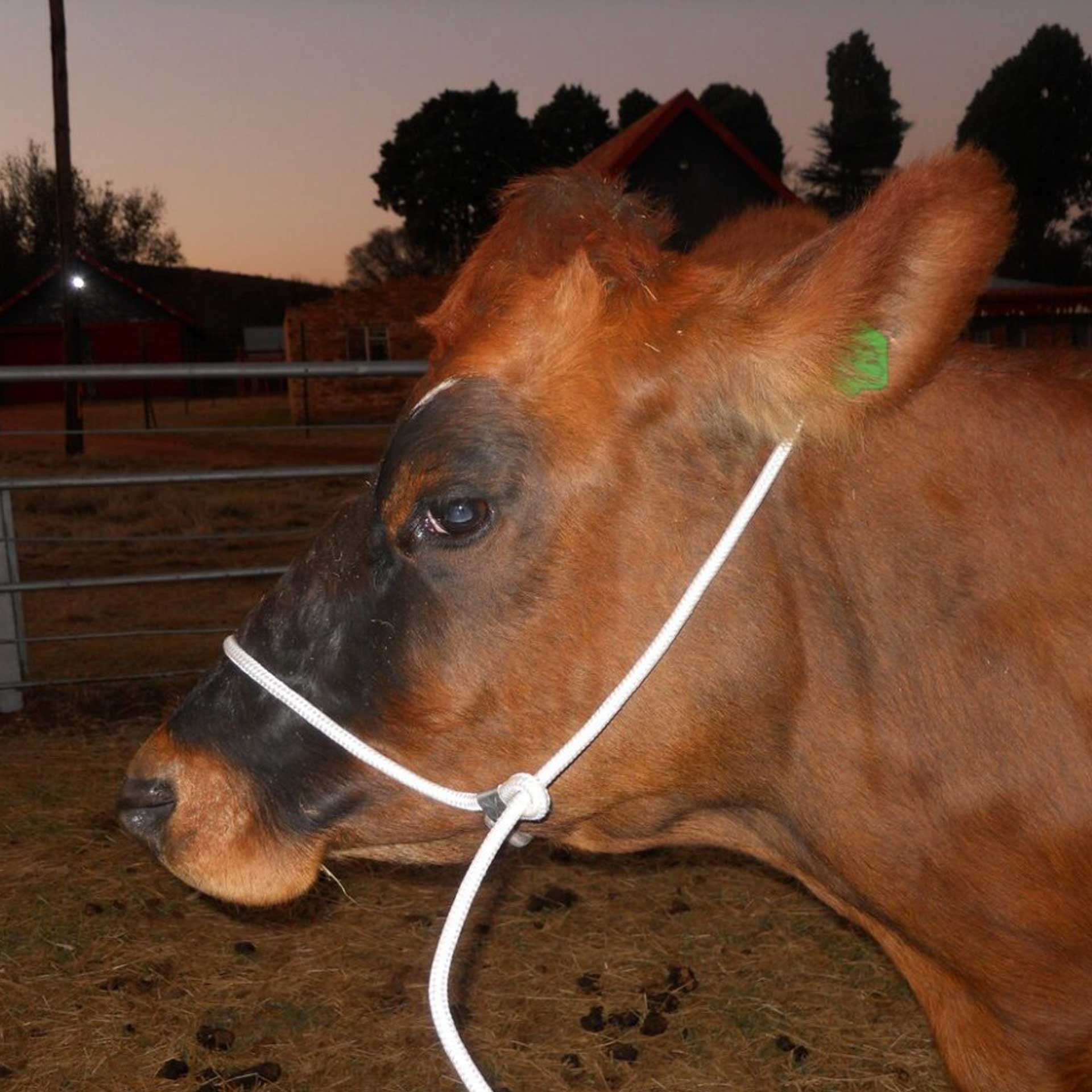Halter Shipping Rope Solo