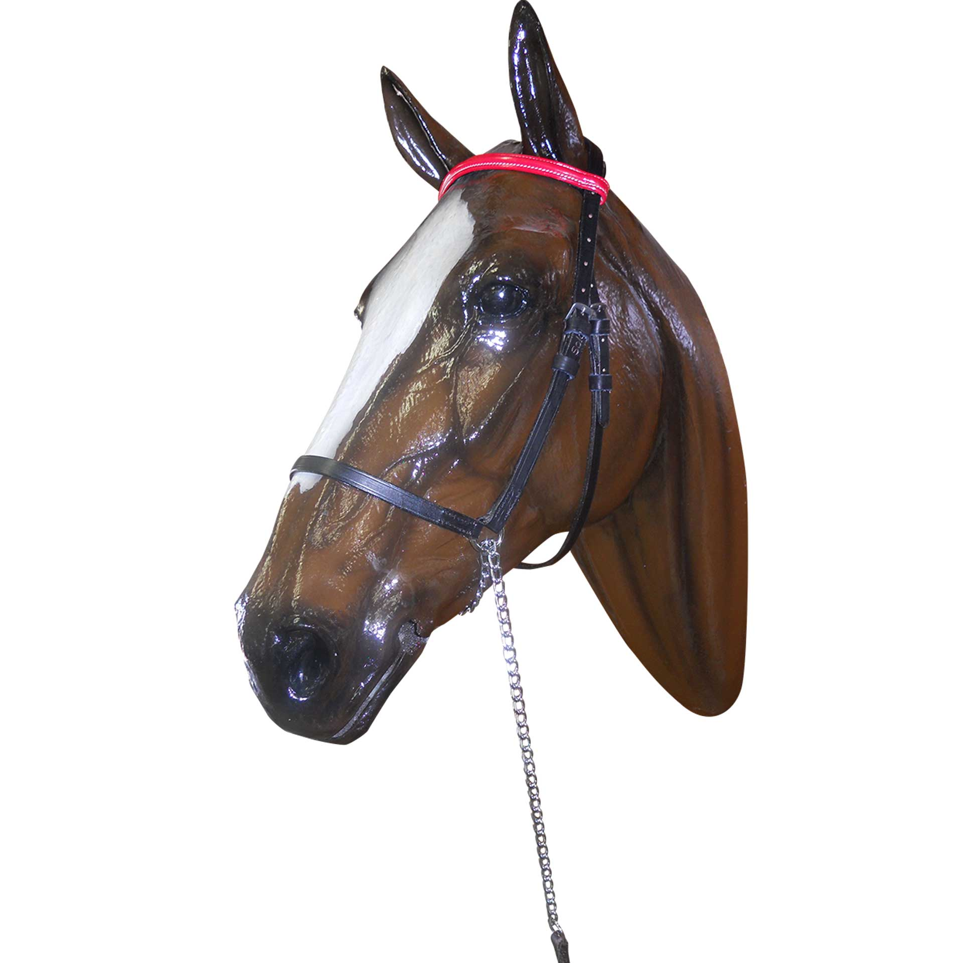 Halter Show Coloured Browband + Lead